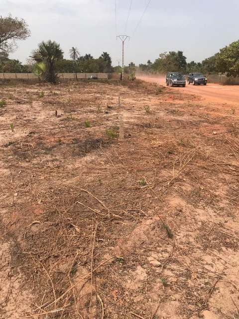 Sanyang Selling Plots