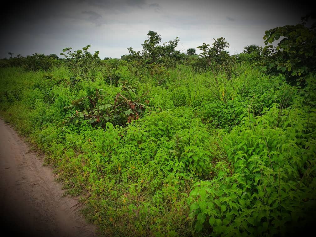 Plots of Land for SALE in Taibatou