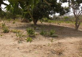 Empty plot of land for sale located at Sukuta.
